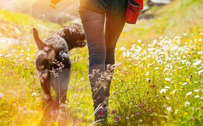 Waarom zou je meer moeten wandelen?