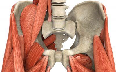 Pelvic Chiropractor