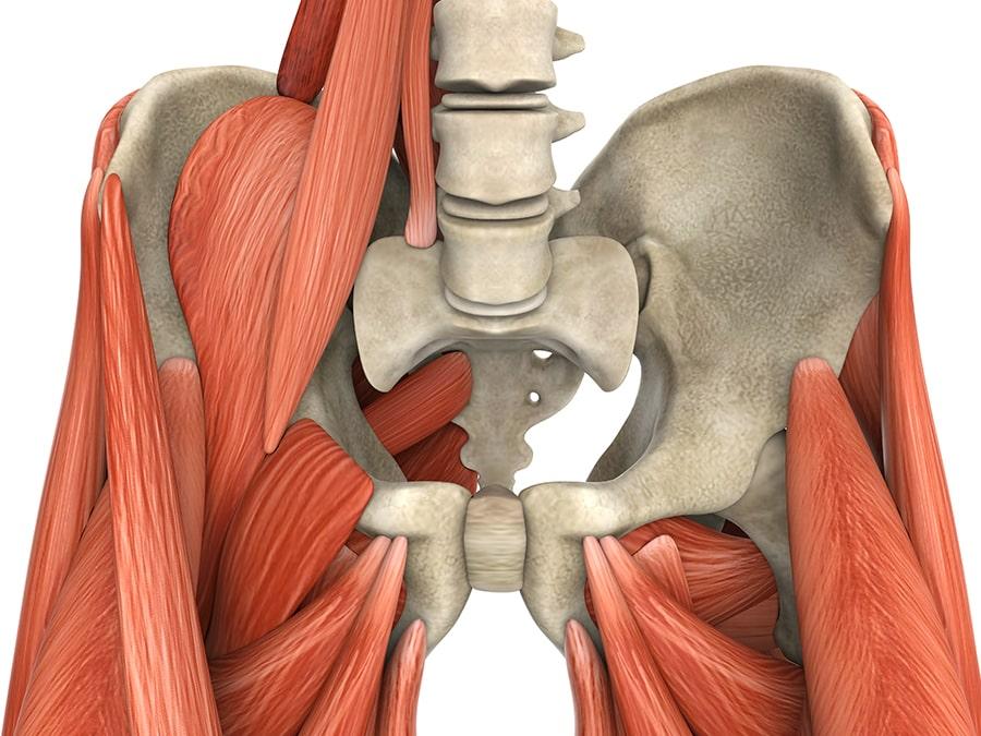 Bekken chiropractor